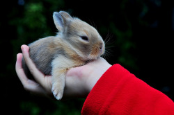 funnywildlife:  the rabbit in hand by Winter Fotographie on Flickr.