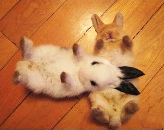 cute-overload:  Bunnies being bunnieshttp://cute-overload.tumblr.com