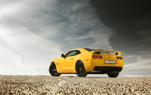 carpr0n:  Queen bee Starring: Chevrolet Camaro (by CiprianMihai)