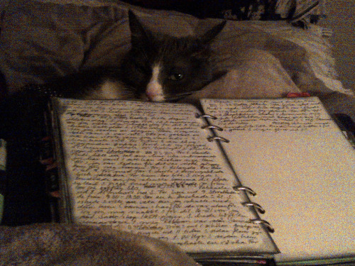 Berit (the cat) and my Kendal Filofax (by ideabook.se)