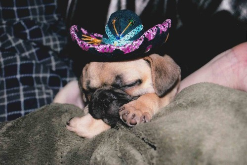 Fur baby is still pooped from partying this weekend! (submitted by Lilone13!)