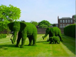 The best lawn art I've seen in a while - Imgur