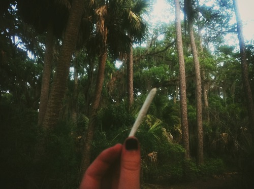 castillejas:  Joints in the jungle