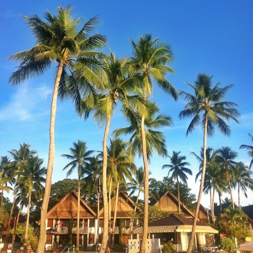 #palau #pacific #resort #ppr (at Palau Pacific Resort)