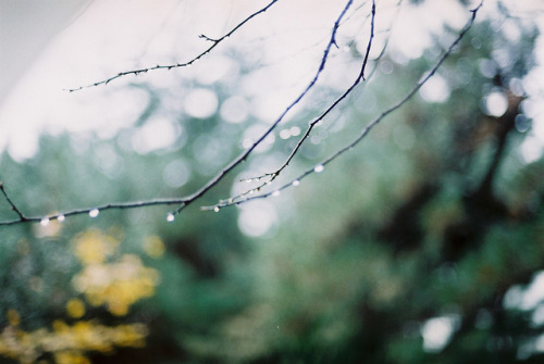 magic-spelldust:  untitled by Kumiko_oMochi on Flickr.