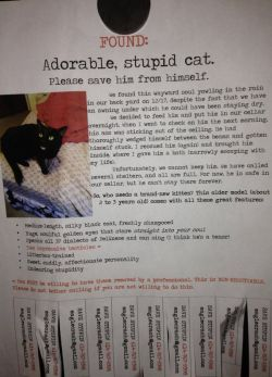 memehumor:  Saw This Found Cat Poster on My Way to Work.http://memehumor.tumblr.com
