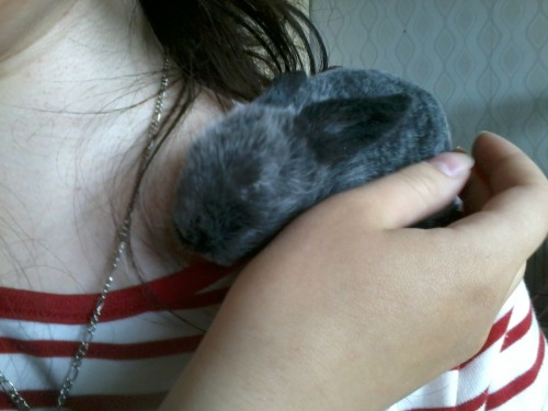 There is a tiny baby bunny sleeping on my shoulder.   Nothing else mattersssss…