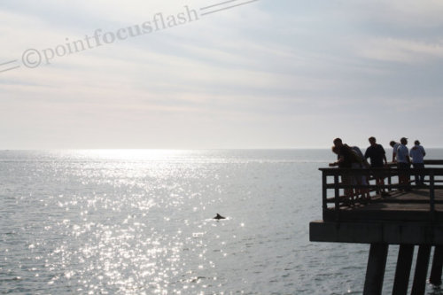 "pointfocusflash:  New Photo in the Point Focus Flash Etsy shop: ""Naples Pier"" Many people were out walking the pier in Naples, Florida waiting for the sunset. The Gulf water was as active as the pier with sting rays, fish, dolphins, and YIKES! No wait. That's a dolphin. Phew. To see more of our photos, visit our shop at pointfocusflash.etsy.com."