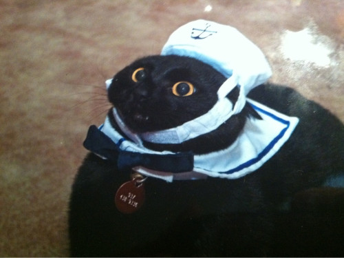 unimpressedcats:  captain kitty