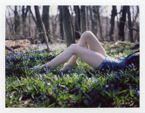 (Bluebells on Flickr.) *After a bit of research, I think these may actually be scilla siberica - or a Siberian squill! Either way, they were lovely to lie in. (25.4.2013)