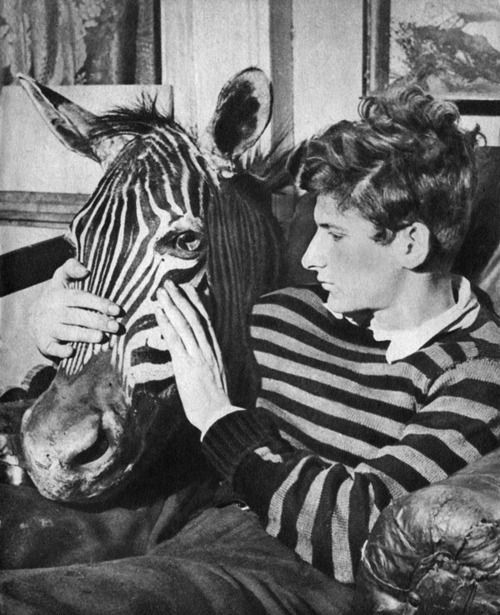 thisisbandofoutsiders:  Lucian Freud with zebra head.