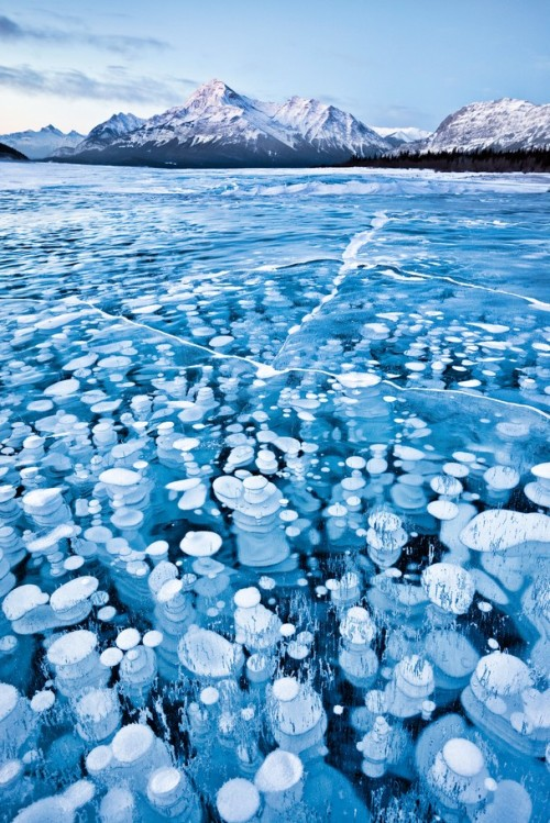 "atlasobscura:  Frozen Bubbles on Abraham Lake by landscape photographer Emmanuel Coupe. ""This image was taken in winter time in a arid area of the Canadian Rockies. Temperatures where below -30 degrees Celsius yet because there was no snow fall the surface of the lake was uncovered allowing me to see and capture the bubbles (gas release from lake bed) that were trapped in the frozen waters."""