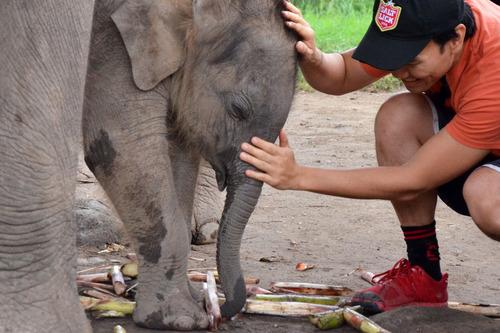 Patara Elephant Farm - Chiang Mai, Thailand by Michelle Tam http://nomnompaleo.com