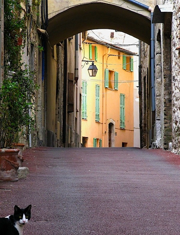 | ♕ |  Le chat de Gattières - Var, France  | by © Bernard Fourmond