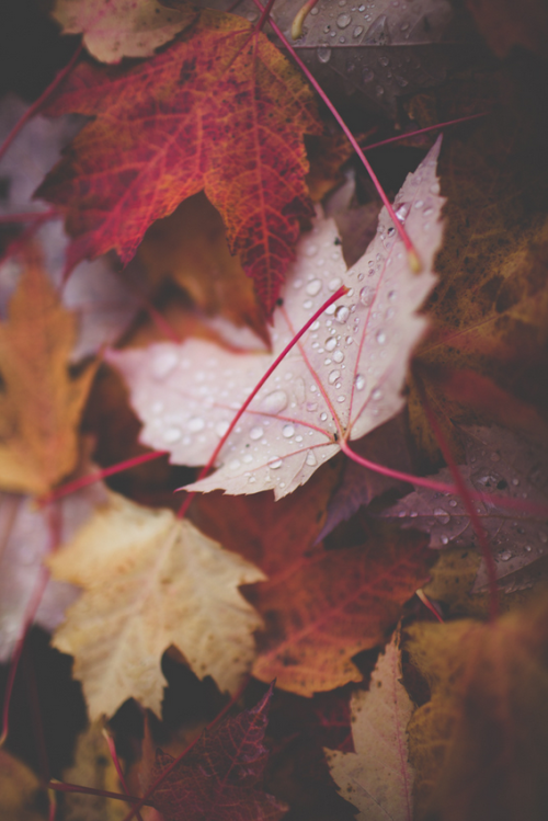 sirmattheww:  Rain in autumn