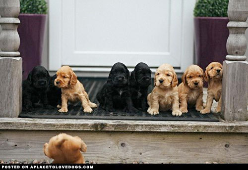 Cute Dog Pictures #Dog Pictures#Animal #Cute Dog Pic