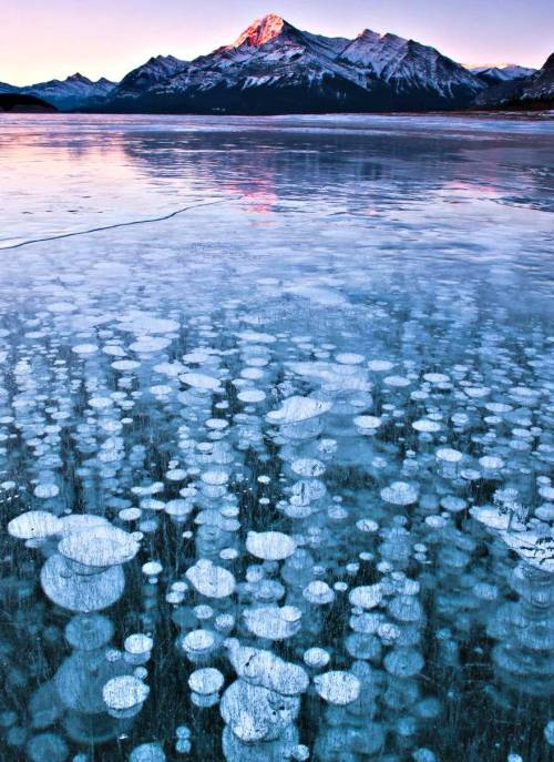 randomcontrast:  STUNNING FROZEN AIR BUBBLES AT ABRAHAM LAKE, CANADA