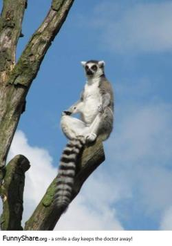 sofia-melania-s:  Just saw King Julien in the zoo.