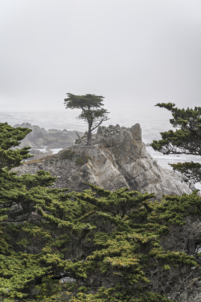 llbwwb:   The Lone Cypress.I'll have to look for my shots of this tree:) (by phototravel1/Jim Watkins)
