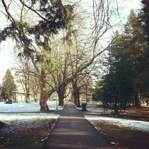 Afternoon walk through the park #trees #snow #cold #winter #sunny #freshair #newwestminster #errands #instaphoto #Instagram #dailywalk