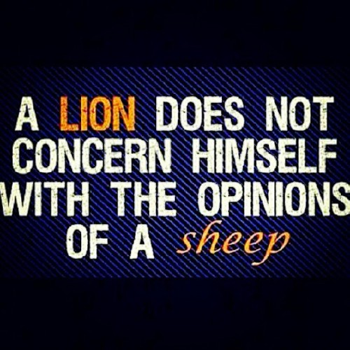 Be a LION (leader) not sheep (follower) #lionofjudah #leader #opinions #haters #watchers #followers #trailblazer #leo #king #greatness #successful #apexpredator #hunter #closer