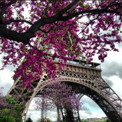 one-twenty-five:  Spring in #Paris… Whoa.
