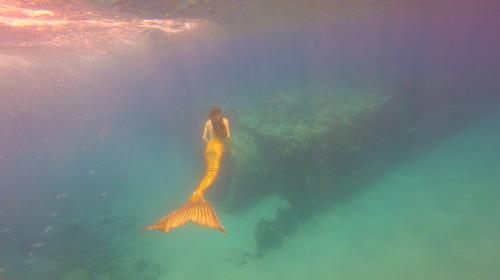 mermaid mertailor h2o mako mermaids hawaii gopro filter girls ocean real mermaid real mermaids mermaid art mermaid painting underwater