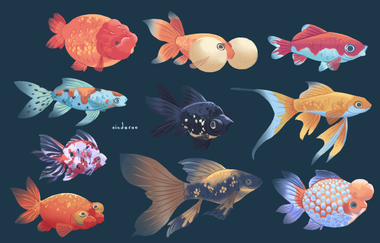 fish: gold edition #fishes#fish#fishblr#aquarium#goldfish#fancy goldfish#ranchu#pearlscale#veiltail#black moor#common goldfish#ryukin#calico#shubunkin#comet goldfish#freshwater#illustration#drawing study #artists on tumblr #cinderoo #cant get enough of fishes