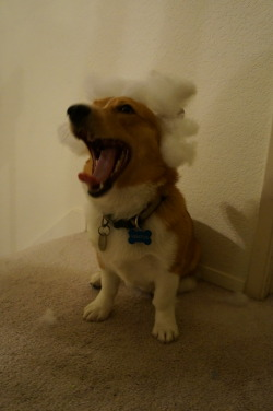 """… FREEDOM. AND LIBERTY. FOR ALL CORGI PEOPLE. YEAAA!"" .. a speech from ""President"" Ventus."