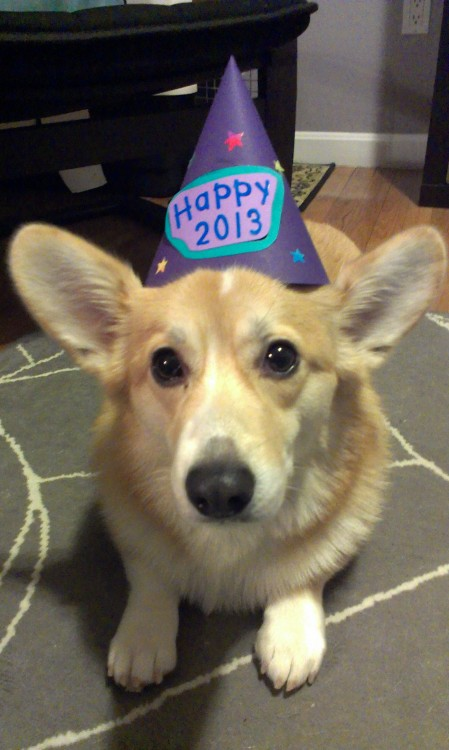 """Happy New Year!   …now please take this stupid thing off my head."""