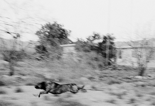museumuesum:  John Divola photographs from the series Dogs Chasing My Car in the Desert 1996-2001 gelatin silver prints, 15.5 x 23 inches each