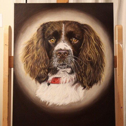 English Springer 18x24 Oil on canvas board