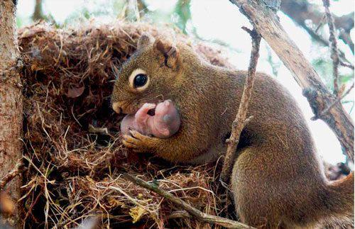PSA:by Unbelievable facts. Squirrels are actually very kind to each other and will adopt abandoned baby squirrels if they notice a relative has not come back for them..