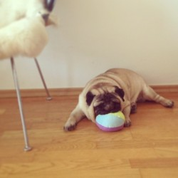 My Sam can't live without his IKEA ball :)