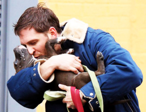 dizzzylu:  Hey, remember that time I wasn't done with Tom Hardy and his puppy? HOW IS HE REAL!???!?!!  HE IS NOT. He was created out of the collective Tumblr fantasies of millions.