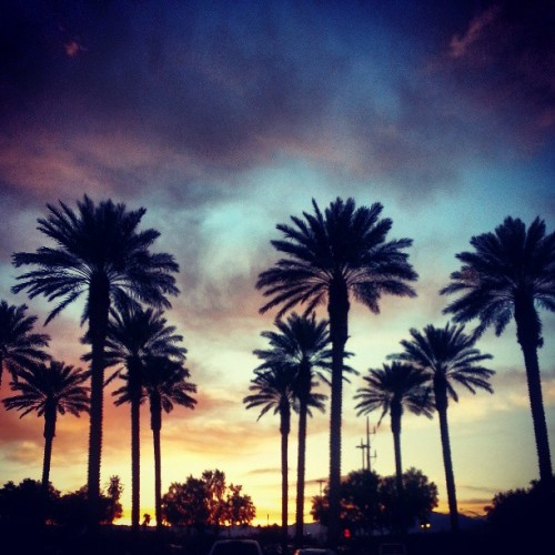 Sunset and Palms (at Palace Station Hotel & Casino)