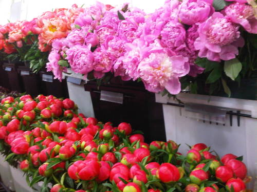 darklamb:  More peonies for the moms.