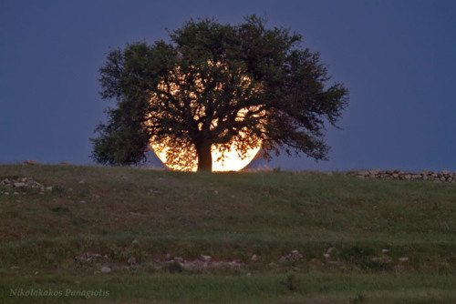Supermoon Rises Behind a Tree — Nikolakakos Panagiotis