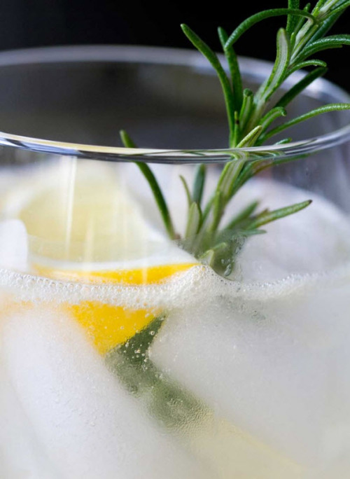 i'm suddenly thirsty. [meyer lemonade with rosemary + vodka]