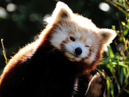 pandas-to-puppies:  Cute here♥