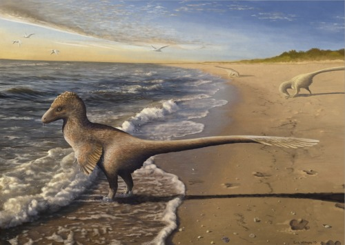 ewilloughby:  Utahraptor stands in the shallows of the great early Cretaceous inland sea, looking out to the horizon as the sun rises. Utahraptor, though one of the largest dromaeosaurs, was certainly not always taking down large prey in a dramatic and bloody fashion. On this morning, these dromaeosaurs were not hungry enough to hunt, so they combed the beach for shellfish and protein minutiae washed in by the tide. A small flock of ornithocheiroid pterosaurs pass by above. Considered making this my 'All Yesterdays' entry (a Utahraptor not being a big badass and ripping apart everything in sight? Unheard of) but ultimately decided to do something more original for that.  Commission for an individual customer. Photoshop CS4, 80+ hours.