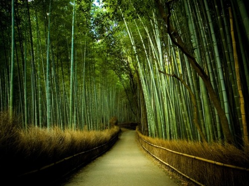path of bamboo | near tenryuu-ji temple ~ marser photographer