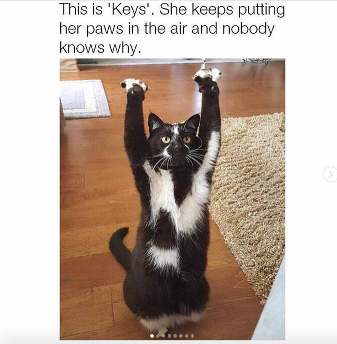 this cat keeps putting its paws in the air and nobody - HD1168×1192