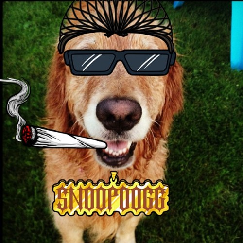 Doggy dogg #Snoopify