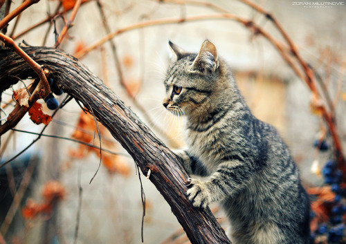 Little Hunter by Zoran Milutinovic