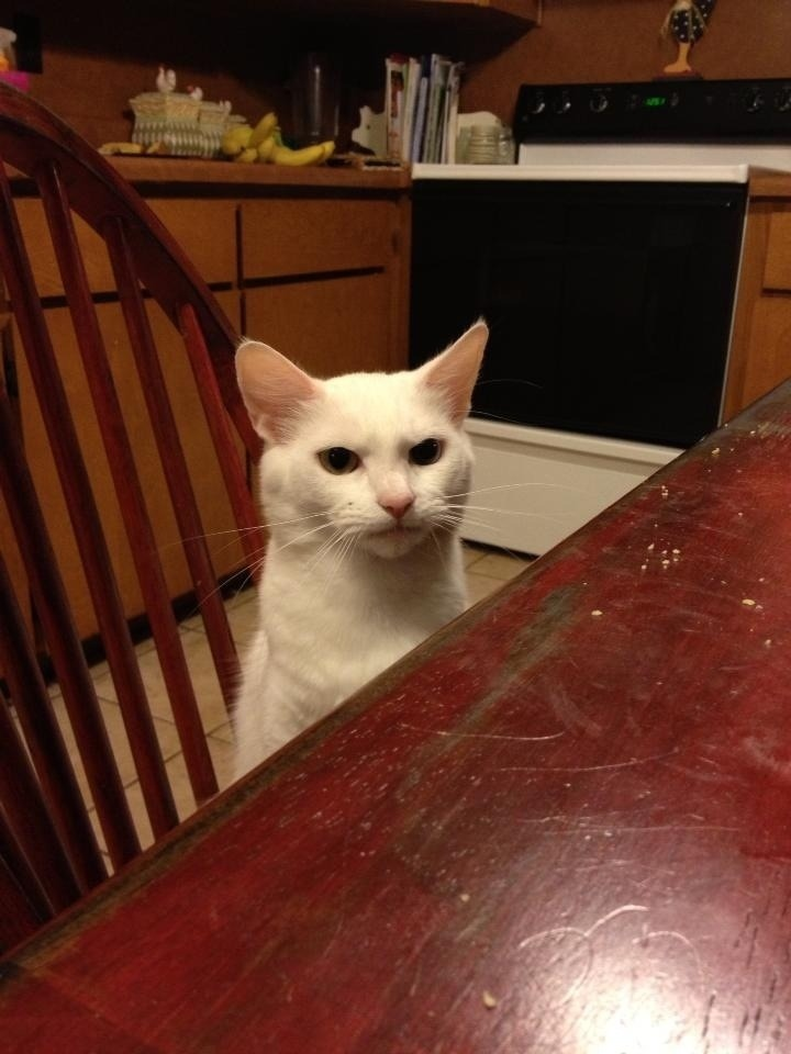 At your table. Disapproving your culinary skills. Photo by ©esolomo1