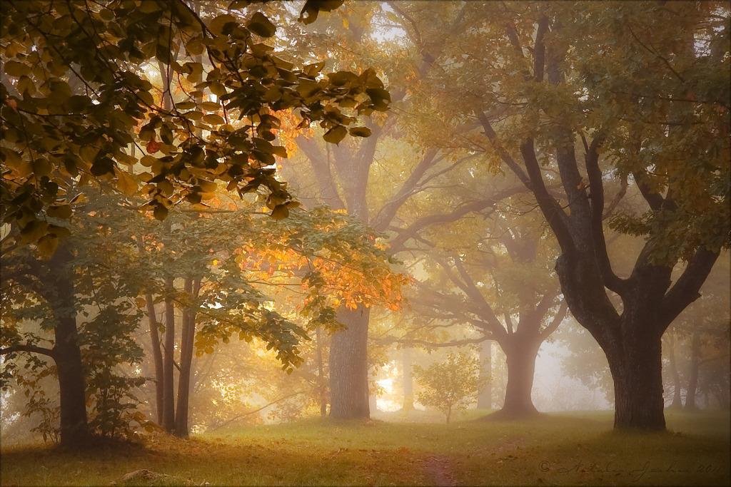 árvores, folhas amareladas