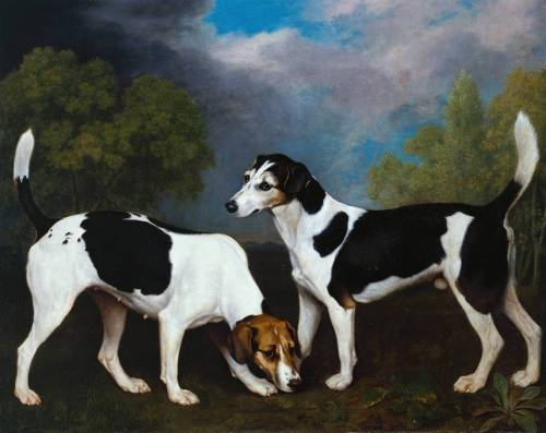cavetocanvas:  George Stubbs, A Couple of Foxhounds, 1792 From the Tate Gallery:  A Couple of Foxhounds was probably commissioned by the Reverend Thomas Vyner of north Lincolnshire. Stubbs was known to have worked for the Vyner family on his return to Lincolnshire in 1776 and again in 1792. Vyner was an avid sportsman and equestrian, and an expert on breeding hounds. He was a close friend of Charles Anderson-Pelham, later 1st Baron Yarborough, and the two often hunted together at Brocklesby, the Pelham estate. Stubbs painted Ringwood(collection Earl of Yarborough), a portrait of the leading hound in the Brocklesby pack, the same year he made this picture, and the hounds depicted in this work are probably of the same breeding. It was Stubbs's practice to paint the foreground animals first, and the background and sky later, painting up to and often over the outline of the figures. His increasingly sophisticated style is apparent if one compares this picture to his earlier depictions of hounds, such as the 1762 Foxhounds in a Landscape (collection Lady Juliet de Chair), in which he posed five dogs in a frieze-like arrangement. Whereas the dogs in the 1762 portrait, equally well-painted, are formally posed, this pair are engaged in almost human interaction.
