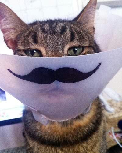 "funnyordie:  ""Yes, the cone isn't humiliating enough."""