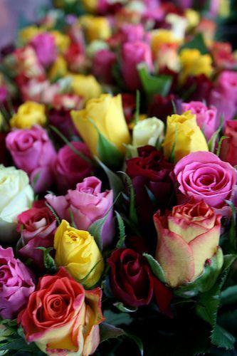 Cvijeće Tumblr_nr4q8652tA1s9mw9ko1_400